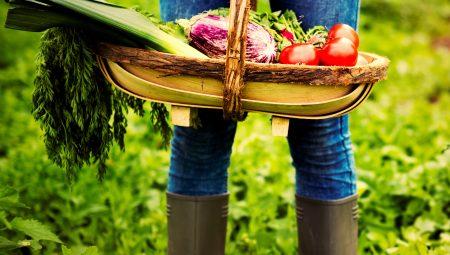 Organik Tarım Nedir? Organik Tarım Nasıl Yapılır?